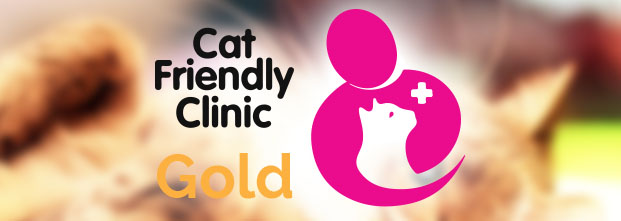 Cat Friendly Gold Clinic